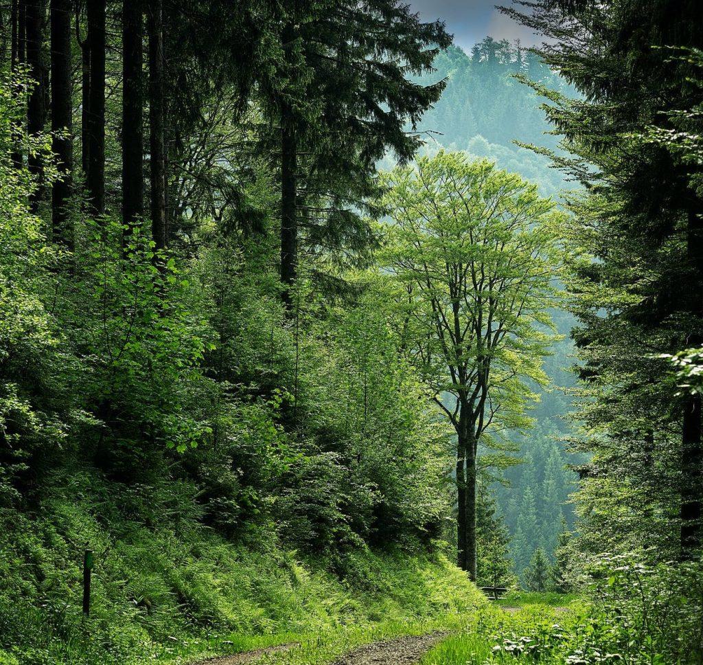 meža terapija